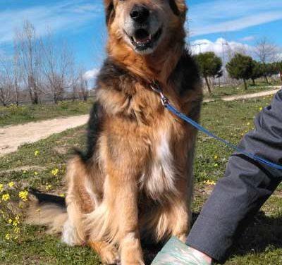 Campaña de control contra las heces caninas en Galapagar