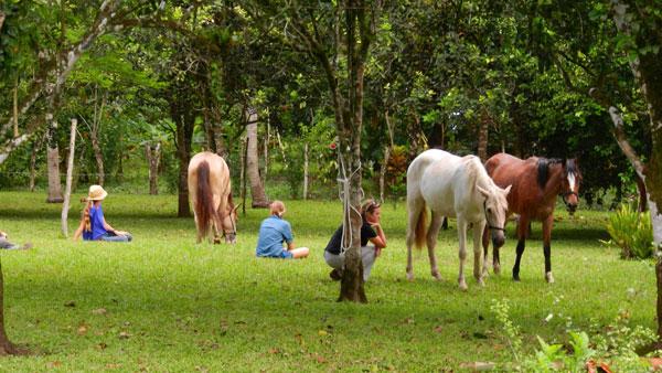 Sesiones gratuitas de coaching con caballos en junio
