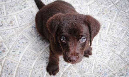 Fenixcam recuerda que los cachorros no son juguetes