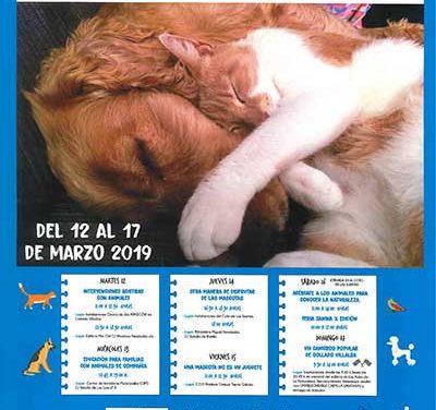Feria Canina y Canicross, una semana dedicada al animal de compañía en Collado Villalba