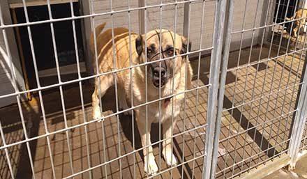 El Centro de acogida animal de Guadarrama busca adoptantes