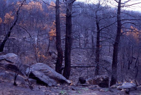 incendio del Monte Abantos en San Lorenzo