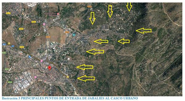 jabalíes en Collado Villalba