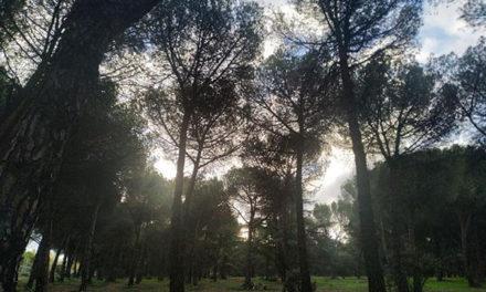 Podas en 14 hectáreas del Monte del Pilar para garantizar la seguridad