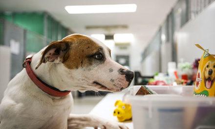 El Centro Animal de Las Rozas reserva plazas para perros de personas sin hogar infectadas por coronavirus
