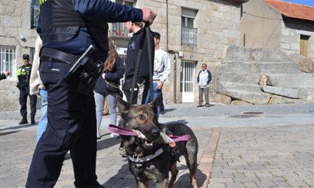 La Unidad canina de Collado Villalba incauta sustancias estupefacientes en los alrededores de centros educativos