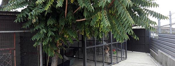 El Centro de Protección Animal de Torrelodones acumula tres años de retraso, asegura el PSOE