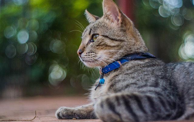 Guadarrama renueva el convenio para el control de colonias felinas