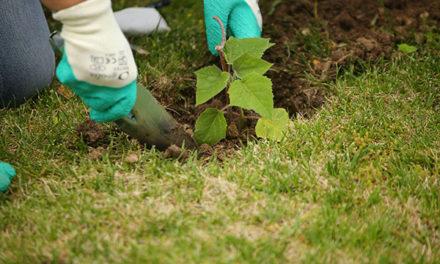 El Ayuntamiento firma un convenio para impulsar la reforestación del municipio