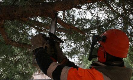 Comienza en Torrelodones el servicio voluntario de recogida de podas
