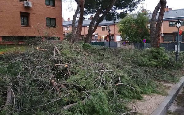 Torrelodones: el PSOE pide un plan urgente de recuperación del arbolado