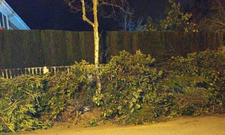 El Ayuntamiento sancionará el abandono de restos vegetales en Torrelodones