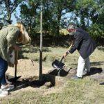 Collado Villalba colaborará con Bosques sin Fronteras en el cuidado del arbolado