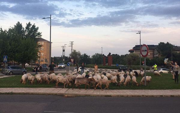 La Escuela de pastores se instalará en Guadarrama este verano