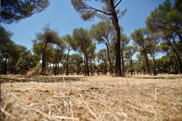 Más de 3 millones de metros cuadrados desbrozados para evitar incendios en Las Rozas