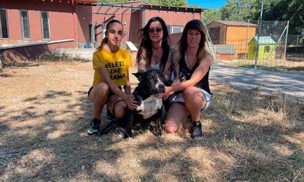 La Huella de Wonder gestionará el Centro de protección animal de Guadarrama