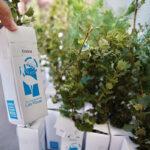 Las Rozas organiza una fiesta familiar para plantar más de 1.000 árboles