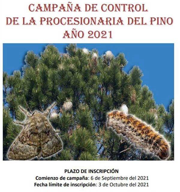 Torrelodones inicia la campaña de control de la procesionaria del pino